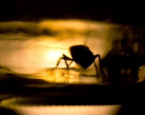 Спросите — ответим: Как борются с тараканами в Израиле