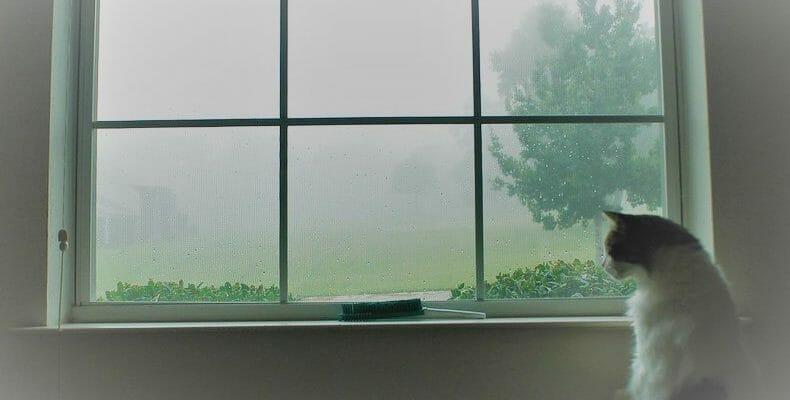 Что делать если запотевают окна. Простой и эффективный способ решения проблемы