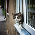 безопасные окна для кошек