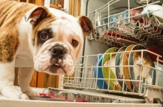 Посудомоечная машина — что учесть при покупке?