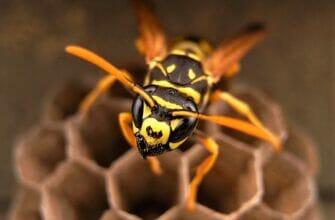 Что делать, если дома осы?