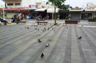 Надоедливые птицы или как избавиться от городских голубей в Израиле