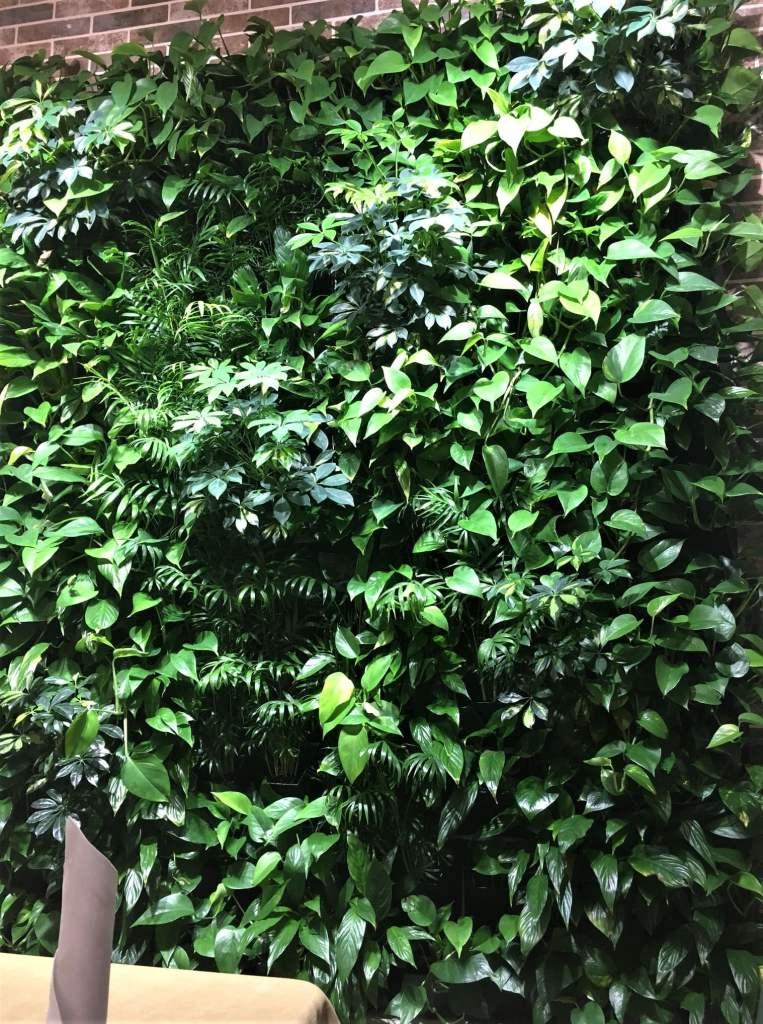 Фримет Максим- вертикальное озеленение квартир, офисов, ресторанов и отелей в Израиле